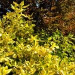 Foliage-2-final
