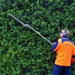 Pruning-final